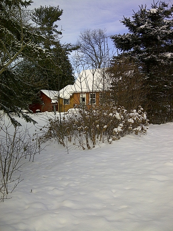 Snowy side yard