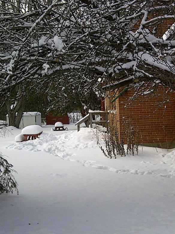 Buckhorn backyard winter 2013