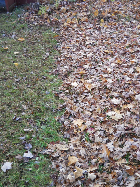 There are so many leaves to rake. I laugh at anyone with a suburban yard!